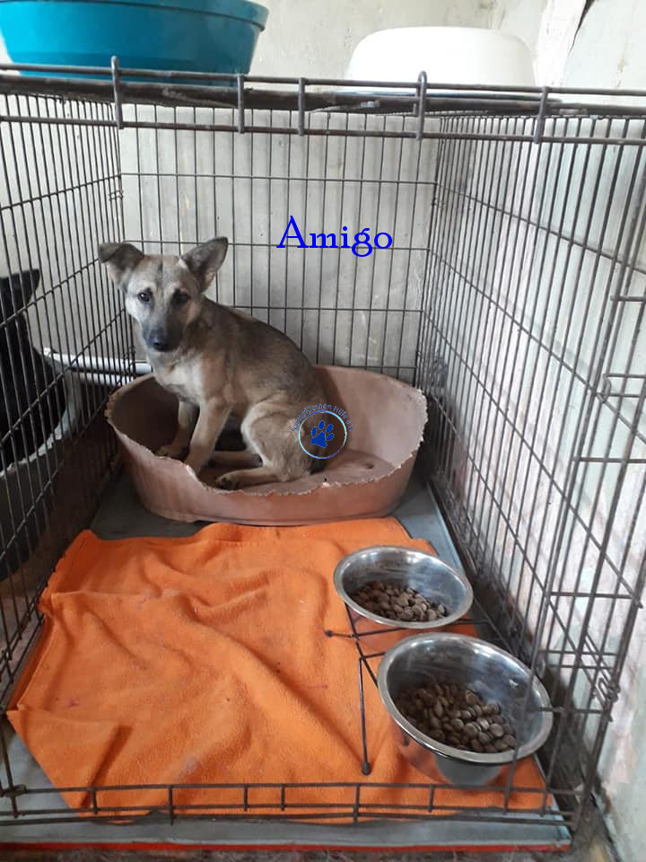 Elena/Hunde/Amigo/Amigo18mN.jpg